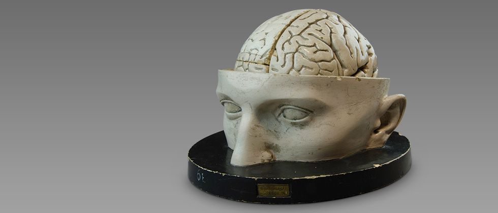 Bock-Steger anatomical head model, circa 1880
